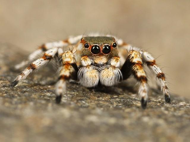 por qué se sufre entomofobia