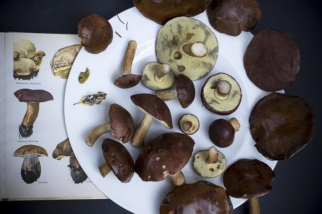 cómo tomar hongo reishi